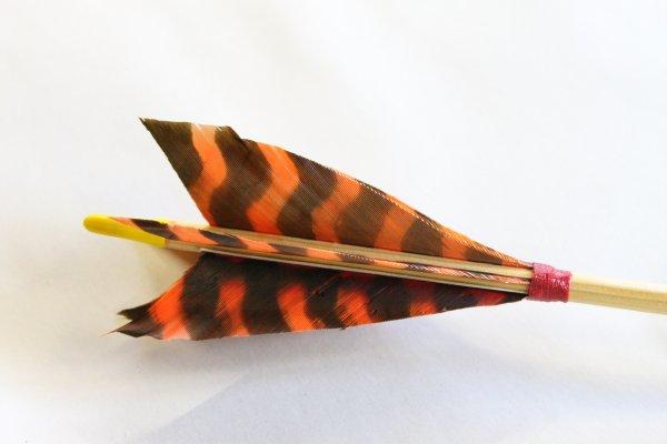 Flame mit Befiederung in orange barred